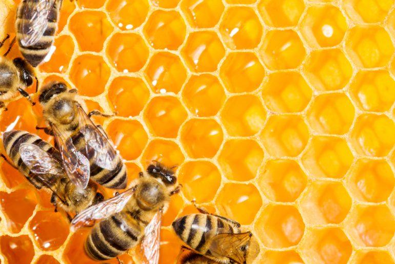 lebanese honey